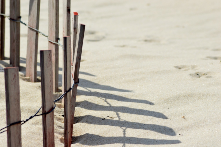 beach_dune_fence