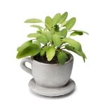 concrete teacup planter